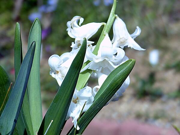 白い小さい花
