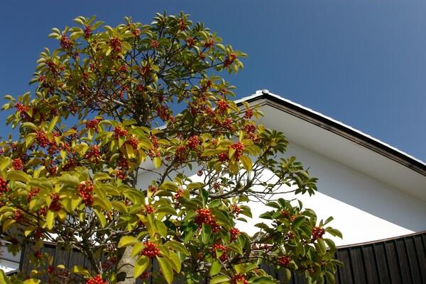 秋晴れ(^_-)-☆