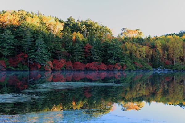 秋を撮りに