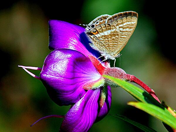 紫の花と蝶