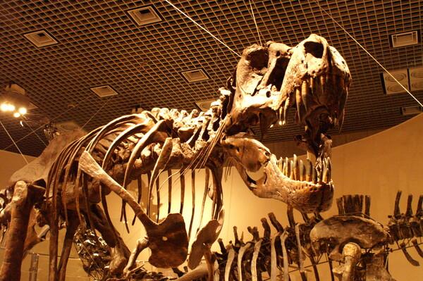 6000万年前の【顔】