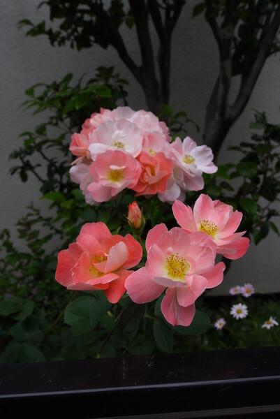 「やさしい 色の花」