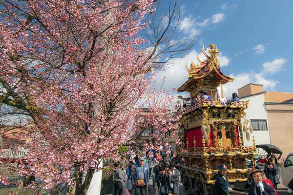 【花のある風景】春の高山祭にて