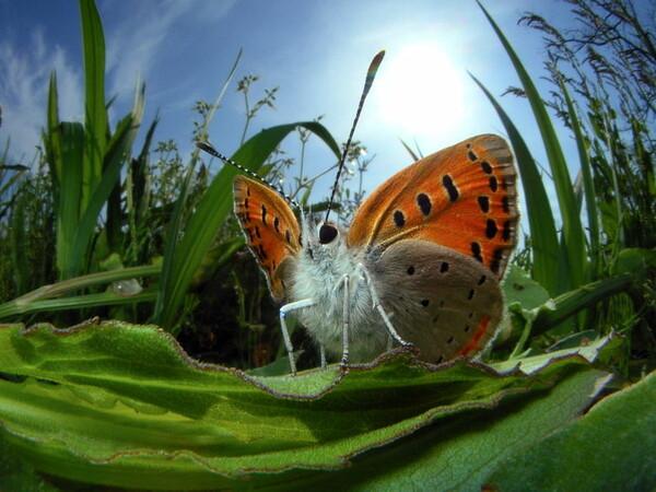 小さな蝶の勇姿
