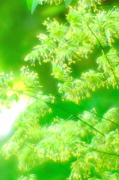 【この色 好き!】春の花#10