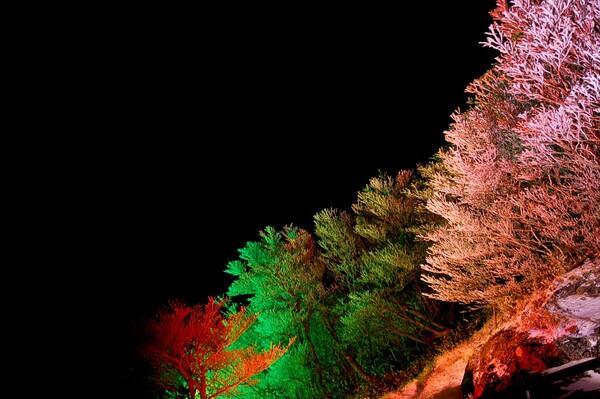 イルミネーションの中の樹氷