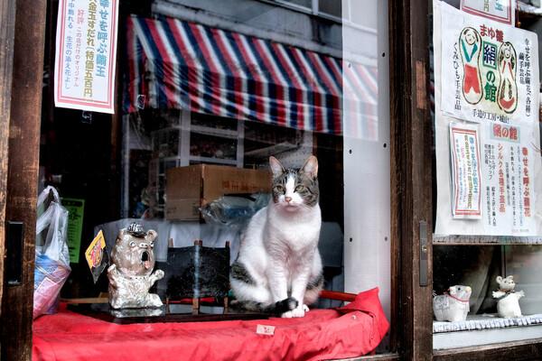 【生活の色】招き猫