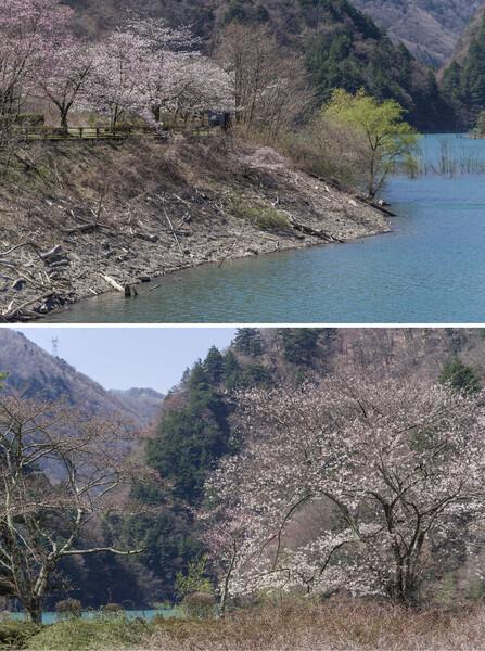 水殿ダムの春