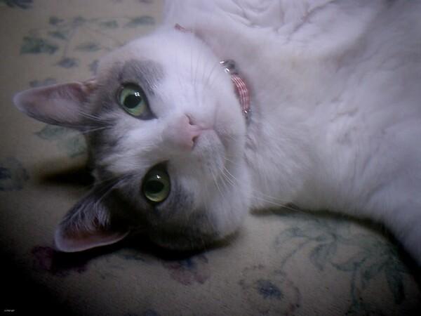 【猫】カメラとにらめっこ!
