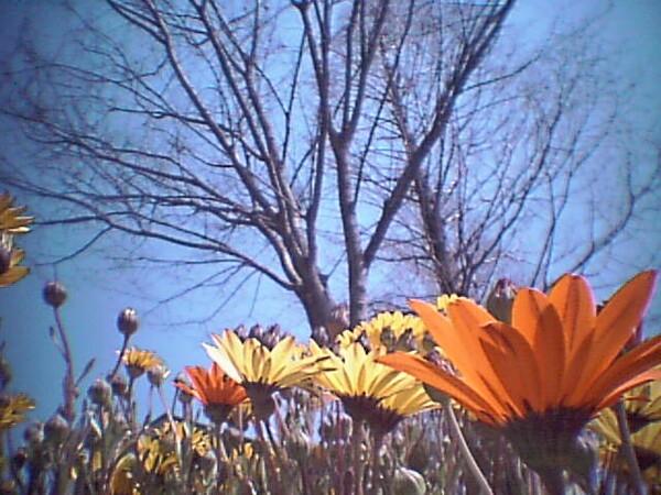 【花のある情景】ファイルNo.37