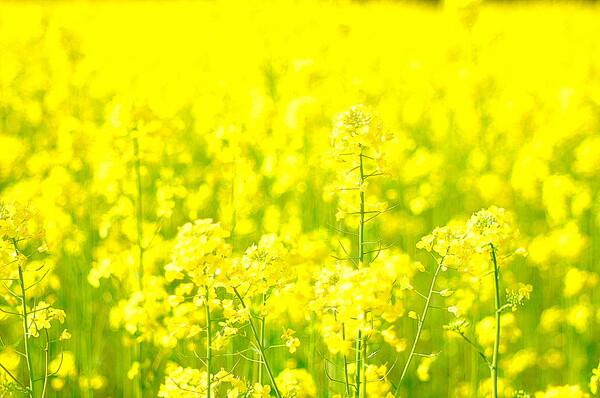 【この色 好き!】春の色#3