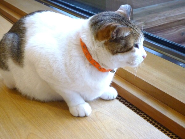 【猫】外は寒いんだろうなぁ・・・