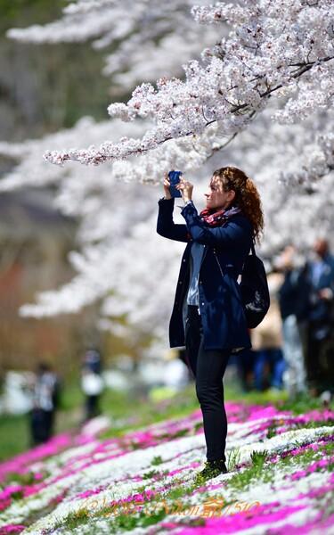 桜撮る御嬢さん