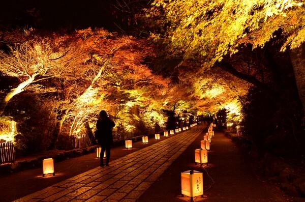 滋賀県石山寺のライトアップ