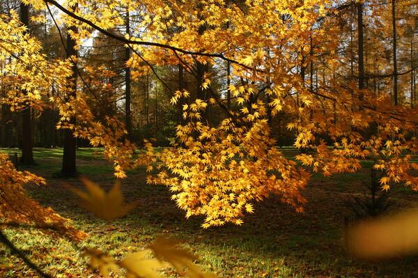 【絵のような】黄葉に陽光