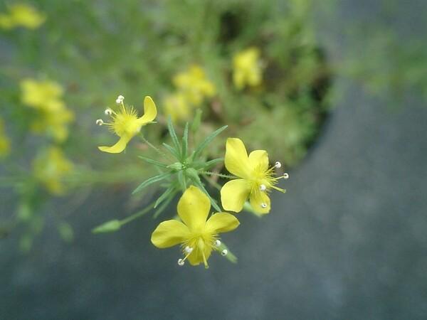 花に隠れたデンデンムシ