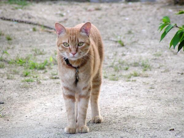 【猫】目線