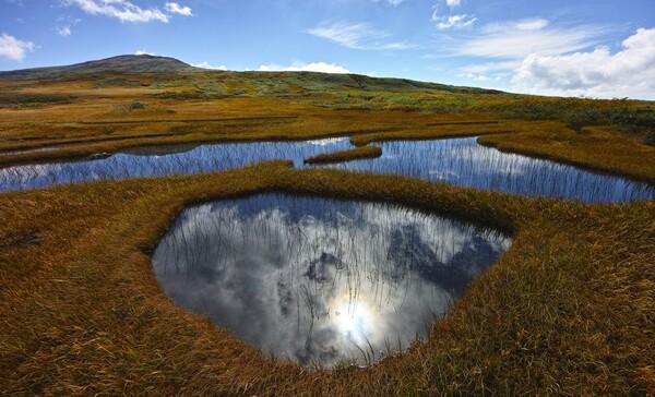秋の弥陀ヶ原湿原