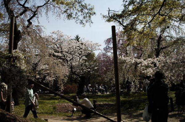 京都植物園より