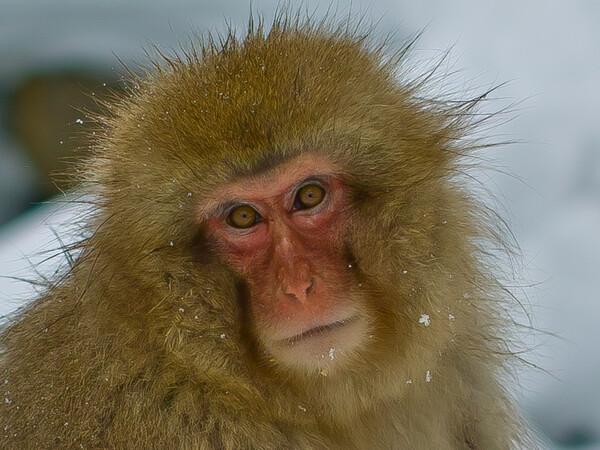 【形】猿顔
