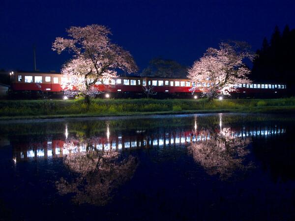 【桜】 夜桜列車