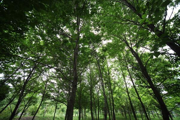 静かな森・・