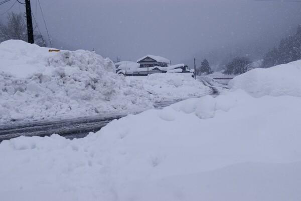 朝から雪が!
