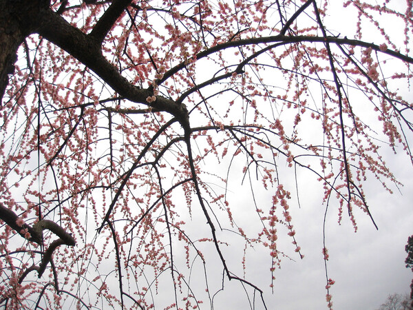 春曇りの中で