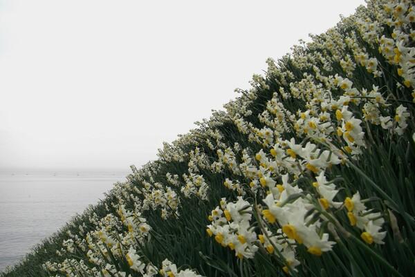 【花のある情景】水仙卿3
