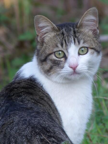 デジスコで猫