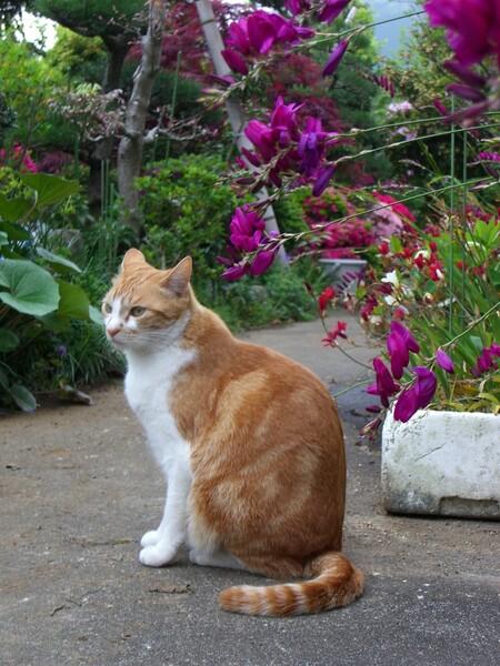 花見をする【猫】ちゃん