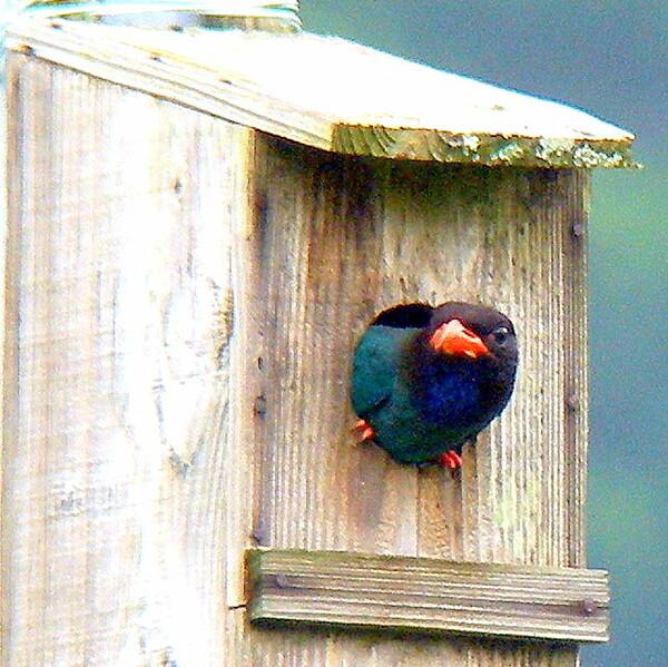 【Purple】な鳥 1