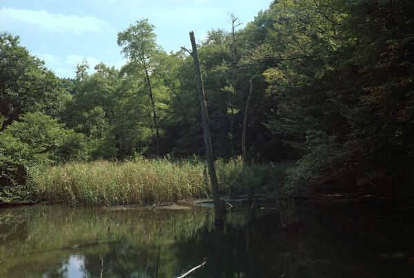 カワセミの来る池