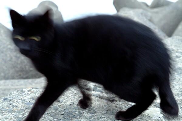 【猫】笑うKATZ
