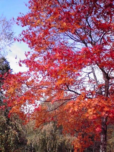 【秋】紅葉