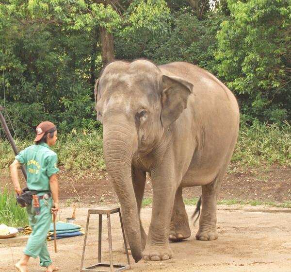 象だぞ〜〜 ベタ過ぎ?