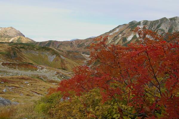 ナナカマドと立山連峰