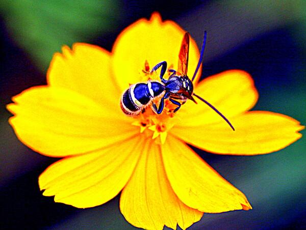 切り取り蜂の画像