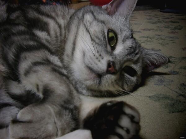 【猫】自分だけの世界