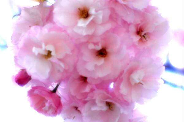 【この色 好き!】春の花#17