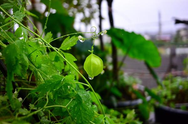 草花は雨で引き立ちます