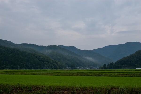 雨がばらばらしている朝。