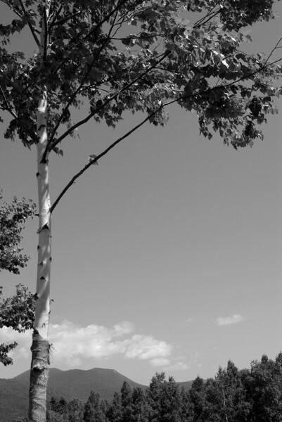 モノクロ化テスト:PhotoImpact10