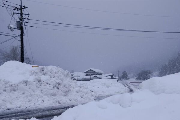 今日も雪!