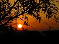 南天の下に沈む【夕日】