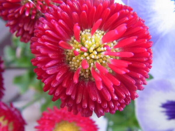1円硬貨ぐらいの花