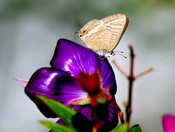 好みの花に蝶が