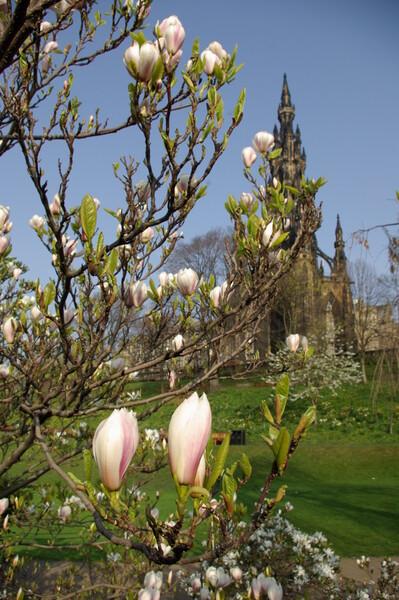 【花のある情景】 スコットランドの春
