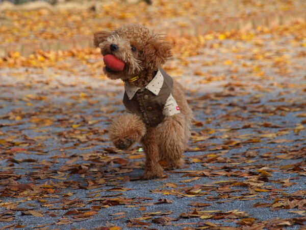 【秋】落ち葉と戯れる