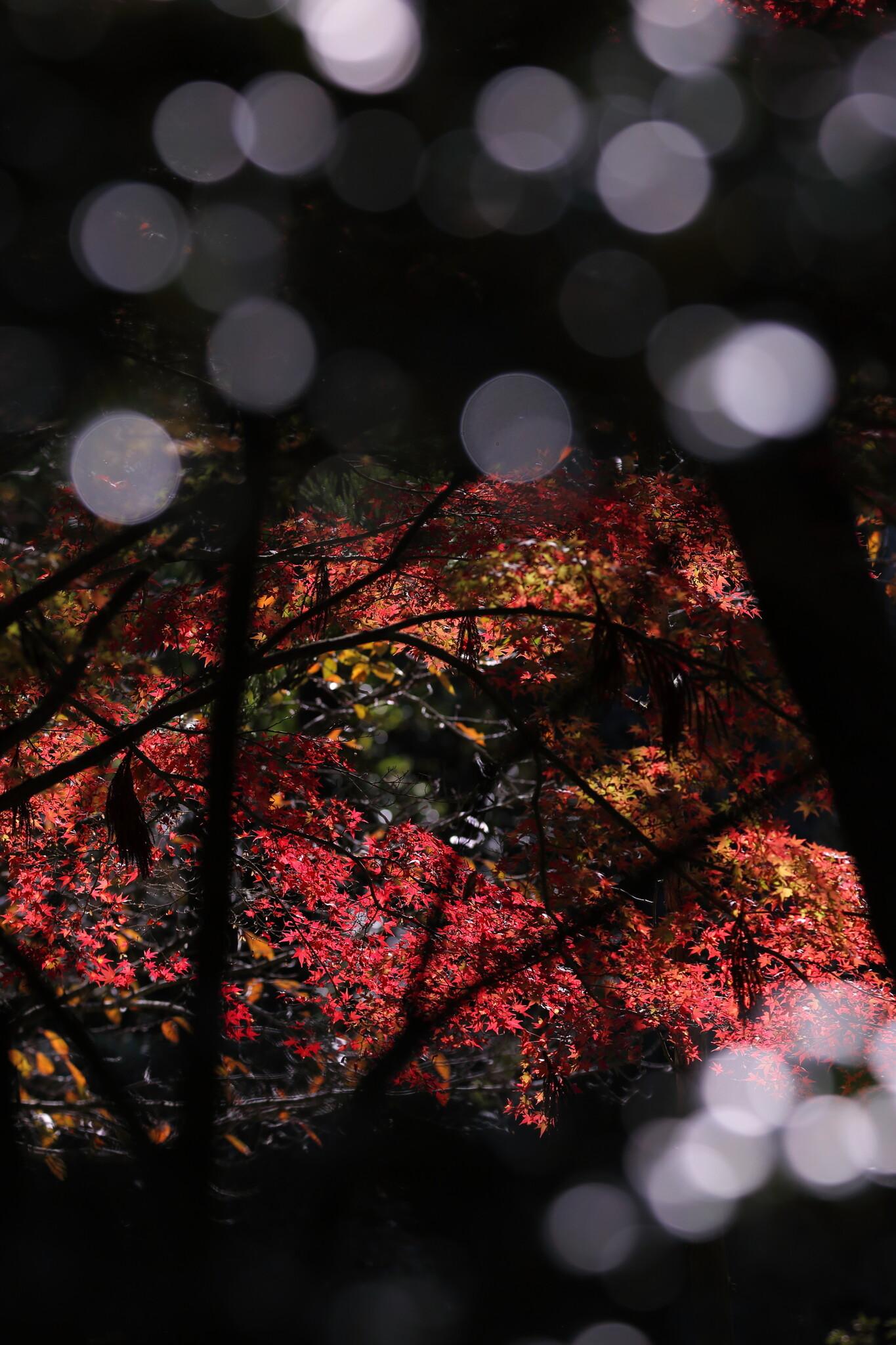 紅葉と前玉ボケ